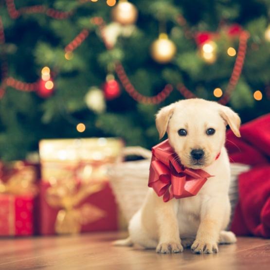 Hundar och fyrverkerier: 6 tips för ett lugnt nyårsfirande