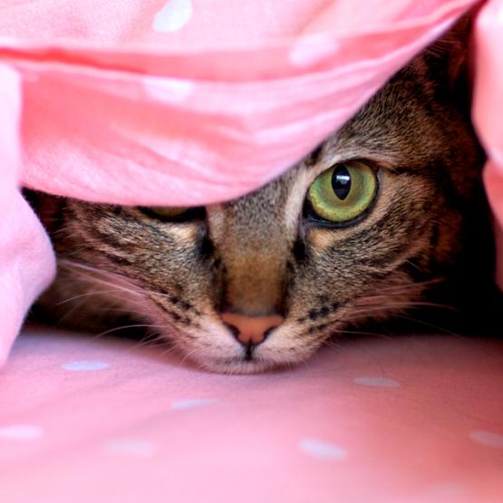 Katter och fyrverkerier: förebyggande åtgärder
