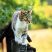 Tips på hur du kan motionera din katt med artros