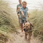Tecken på artros hos hund och katt