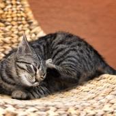 Plocka fästingar på katten? Här kommer några tips!