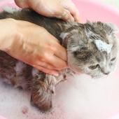 Dags att bada katten? Här kommer några tips!