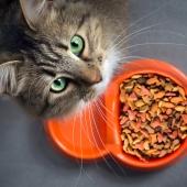 Hjälp, min katt matvägrar!