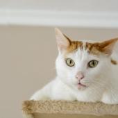 Kissar din katt inomhus? Här följer 3 tips för att lösa problemet