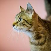 Katters språk: så här tolkar du din katts kroppsspråk