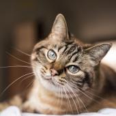 Artros hos katter