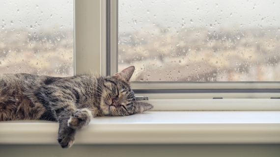 Semesterplaner? Tänk på din katt!