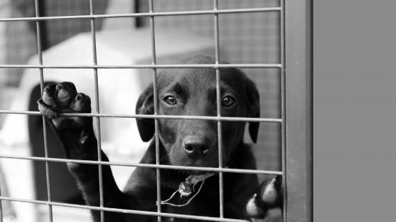 Pensionatsvistelse för din hund under semestern