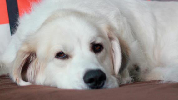 Vad kan du göra för att undvika att din hund får ledbesvär?